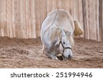 Horse Lying Down The Ground An...