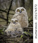 two young baby great horned... | Shutterstock . vector #252176572