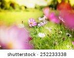 Beautiful Garden Flowers ...