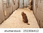 red dog sits on yellow sawdust... | Shutterstock . vector #252306412