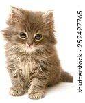 Stock photo beautiful persian little kitten isolated on white background 252427765