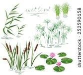 Set Of Wetland Plants....