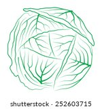 cabbage on white background | Shutterstock . vector #252603715