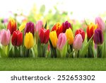 spring green meadow with tulips | Shutterstock . vector #252653302