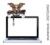 Stock photo jack russell terrier dog waiting to go for a walk with owner leather leash in mouth behind pc 252722452