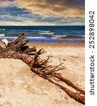 dead branch on sunny summer...   Shutterstock . vector #252898042