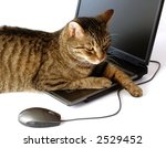 Stock photo business kitty developer portrait of cat with laptop isolated on white background 2529452
