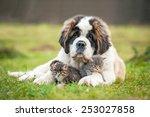 Stock photo saint bernard puppy with little kittens 253027858