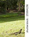water dragon on grass   Shutterstock . vector #25304158