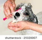 dog getting face washed at groomer - stock photo