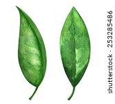 Watercolor Green Tea Leaves Se...