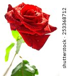 rose  close up  isolated on... | Shutterstock . vector #253368712