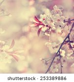 photo of blossoming tree brunch ... | Shutterstock . vector #253389886
