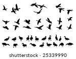 Collection Of Mallard Duck...