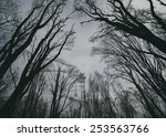 sky view from a forest | Shutterstock . vector #253563766