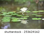 pond lily   Shutterstock . vector #253624162