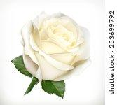 Stock vector white rose vector illustration 253699792