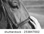 Tenderness. Woman stroking the horse's head, Black and White - stock photo