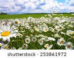The  Blossoming Summer Meadow...