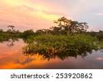 typical vegetation on lagoon... | Shutterstock . vector #253920862