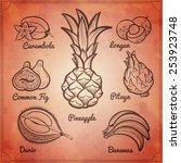 exotic fruits set on vintage... | Shutterstock .eps vector #253923748