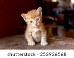Stock photo cute kitten sitting on the log 253926568