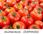 Fresh Tomatoes In Drops Of Dew...