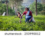 maskeliya  sri lanka   january... | Shutterstock . vector #253990012