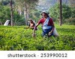 maskeliya  sri lanka   january... | Shutterstock . vector #253990012