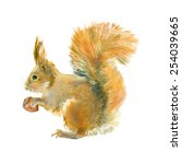 watercolor red squirrel with... | Shutterstock . vector #254039665