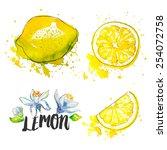 lemon. vector illustration | Shutterstock .eps vector #254072758