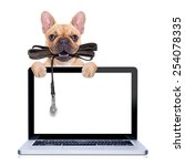 Stock photo fawn french bulldog with leather leash ready for a walk with owner behind a laptop pc computer 254078335