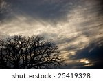 Tree Silhouette And Clouds
