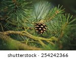 branch of pine tree with...   Shutterstock . vector #254242366