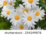 macro of beautiful white... | Shutterstock . vector #254249878