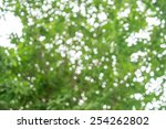 green nature blur bokeh... | Shutterstock . vector #254262802