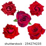 Stock photo set of flowers of red roses isolated on white background 254274235