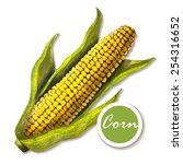 Marker Sketch Of Corn On White...