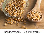 whole wheat sprouts in wooden... | Shutterstock . vector #254415988