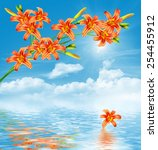 branch flower lily on a... | Shutterstock . vector #254455912