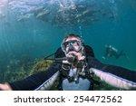 Diver Approaching Sea Lion...
