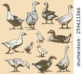 vector collection of goose  ... | Shutterstock .eps vector #254611366