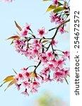 wild himalayan cherry  prunus... | Shutterstock . vector #254672572