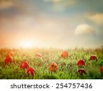 easter eggs in spring grass.... | Shutterstock . vector #254757436