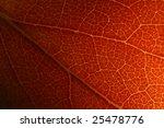 Golden Apple Close Up Leaf...