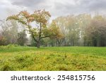 tree on clearing in cold morning fog. autumn park with forgotten bowers - stock photo