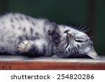 Stock photo cute purebred cat 254820286
