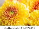 Orange Yellow Chrysanthemum...