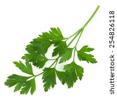 parsley isolated on white   | Shutterstock . vector #254826118