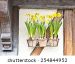 Pots Of Daffodils Hanging On A...